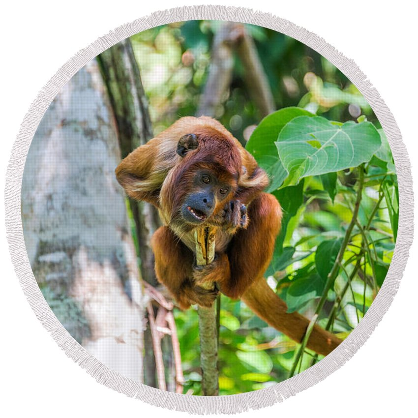 Monkey Round Beach Towel featuring the photograph Young Red Howler Monkey by Jess Kraft