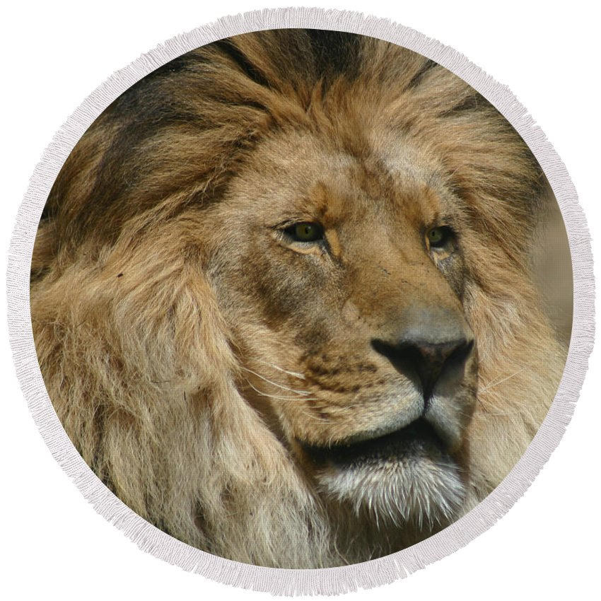 Lion Round Beach Towel featuring the photograph Your Majesty by Anthony Jones
