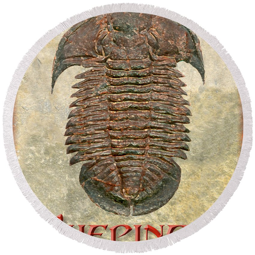 Trilobite Fossil Ancient Colorful Exotic Paleontology Marine Prehistoric Unique Cool Awesome Yuepingia Round Beach Towel featuring the photograph Yuepingia Fossil Trilobite by Melissa A Benson
