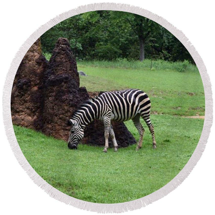 Zebra Round Beach Towel featuring the photograph Zebra by Renee Sosanna Olson