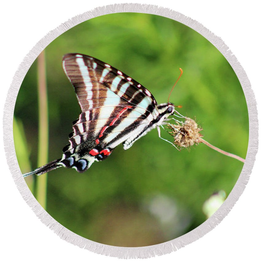 Zebra Round Beach Towel featuring the photograph Zebra Swallowtail Butterfly In Garden 2016 by Karen Adams