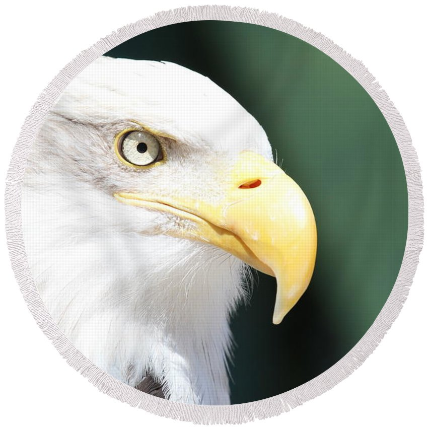 Eagle Round Beach Towel featuring the photograph Zeroed In by Laddie Halupa