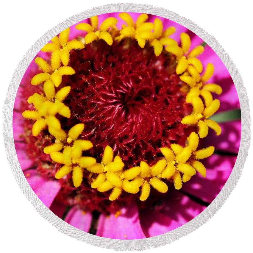Pink Round Beach Towel featuring the photograph Zinnia Macro by Angela Rath