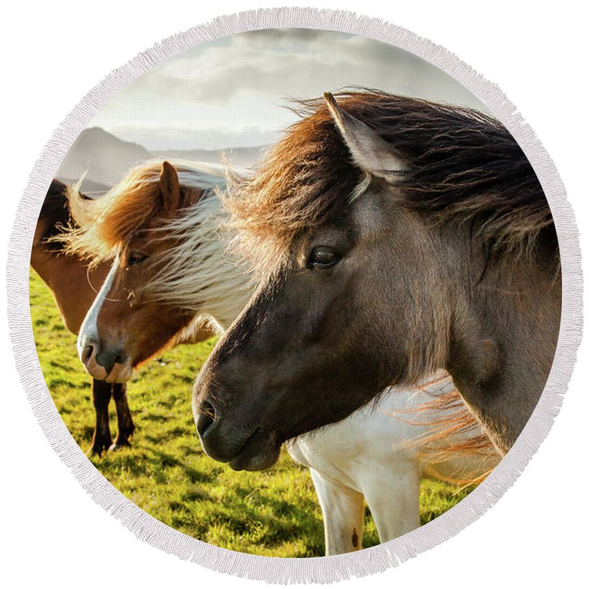 Iceland Round Beach Towel featuring the photograph Icelandic Horses by Peter OReilly