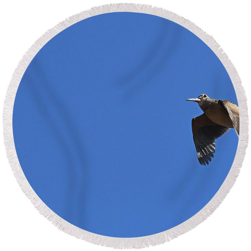 American Woodcock Round Beach Towel featuring the photograph Scolopax Minor In-flight by Asbed Iskedjian