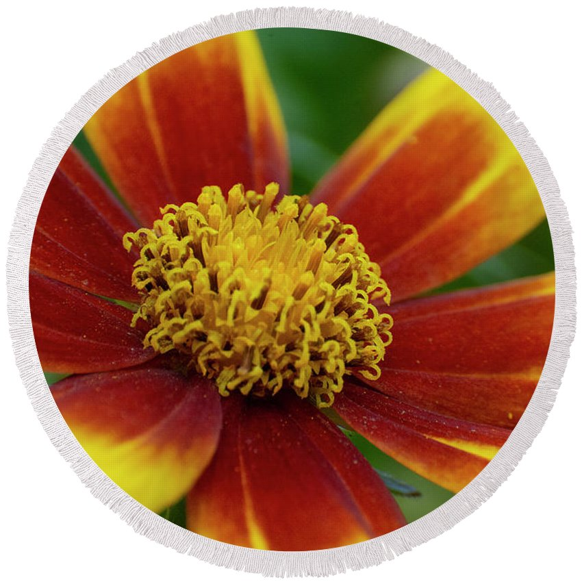 Rudbeckia Round Beach Towel featuring the mixed media Rudbeckia by Smart Aviation
