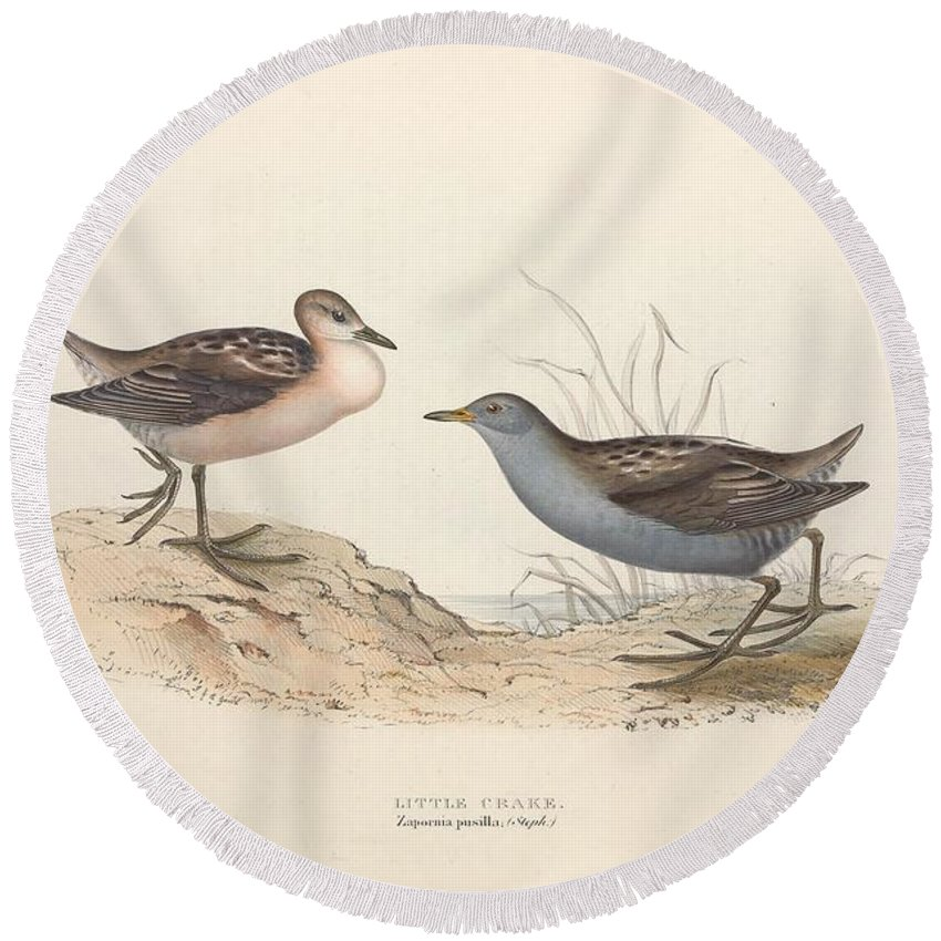 Nature Round Beach Towel featuring the painting Different Types Of Birds Illustrated By Charles Dessalines D Orbigny 1806-1876 21 by Charles Dessalines D Orbigny
