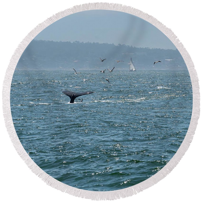 Big Round Beach Towel featuring the photograph A Whale's Tail Above Water With Sail Boat In The Background by PorqueNo Studios