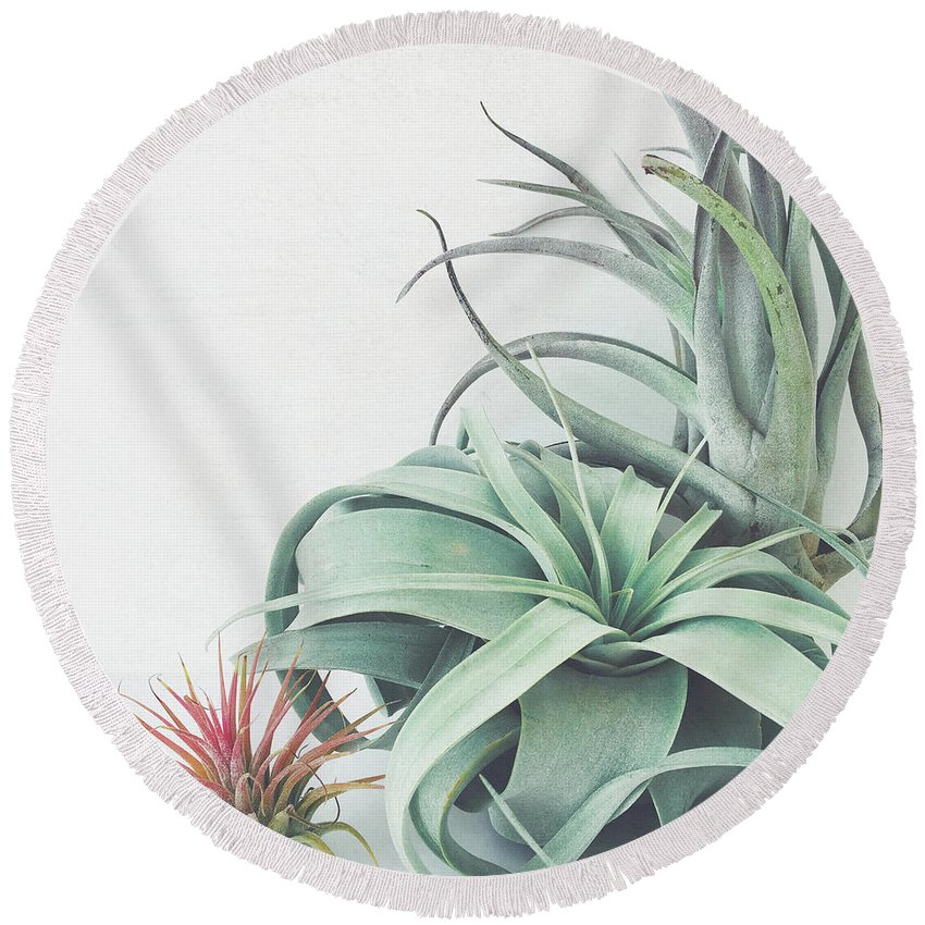 Plants Round Beach Towel featuring the photograph Air Plant Collection by Cassia Beck