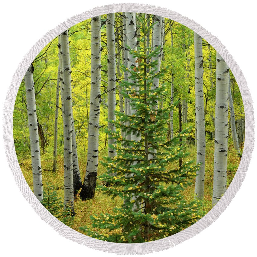 North America Round Beach Towel featuring the photograph Aspen Christmas Tree by Christian Heeb