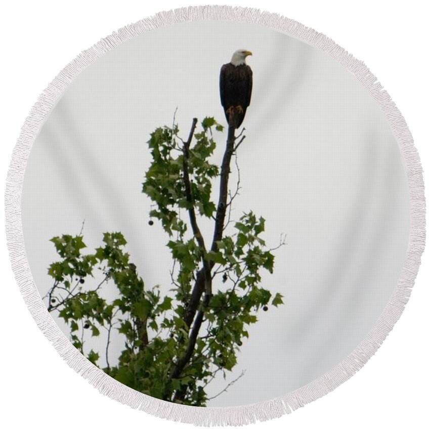 Round Beach Towel featuring the photograph Bald Eagle by Renee McAndrew