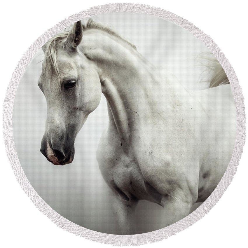 Horse Round Beach Towel featuring the photograph Beautiful White Horse On The White Background by Dimitar Hristov