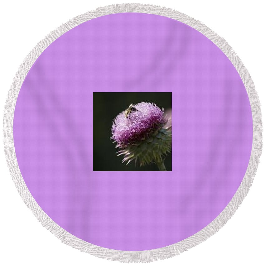 Bee Round Beach Towel featuring the photograph Bee On Thistle by Nancy Ayanna Wyatt