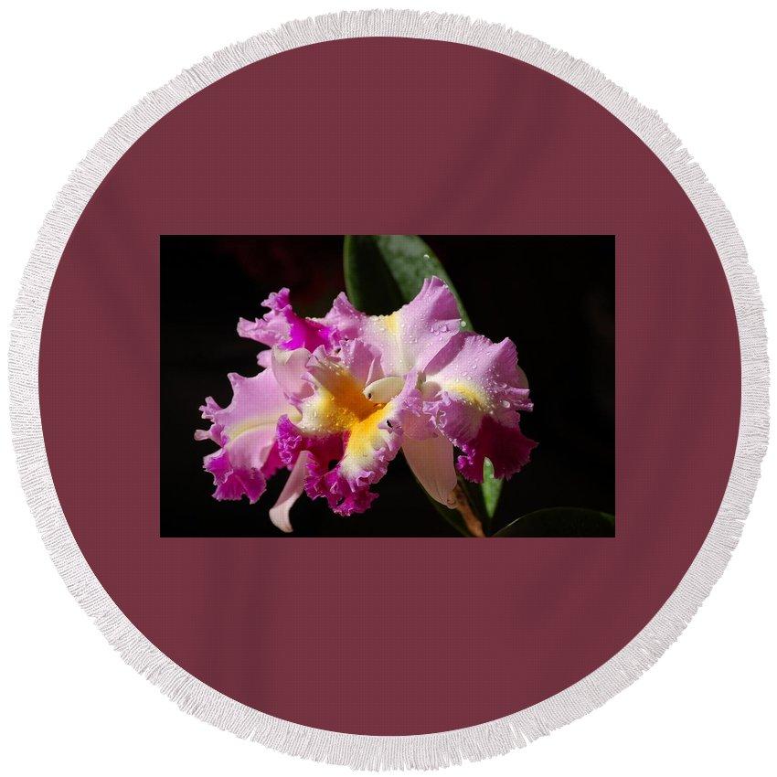 Orchid Round Beach Towel featuring the photograph Best Cattleya by Nancy Ayanna Wyatt
