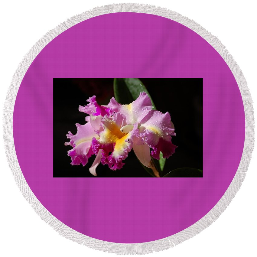 Orchid Round Beach Towel featuring the photograph Best Cattleya by Nancy Ayanna Wyatt