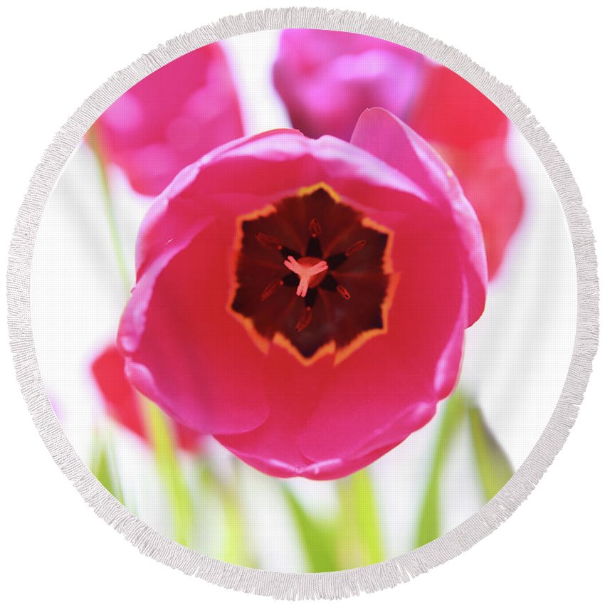 Hot Pink Round Beach Towel featuring the photograph Bright Beginnings by Emily Johnson