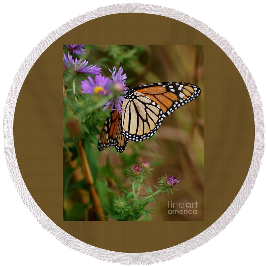Butterfly Round Beach Towel featuring the photograph Butterfly by Deb Cawley