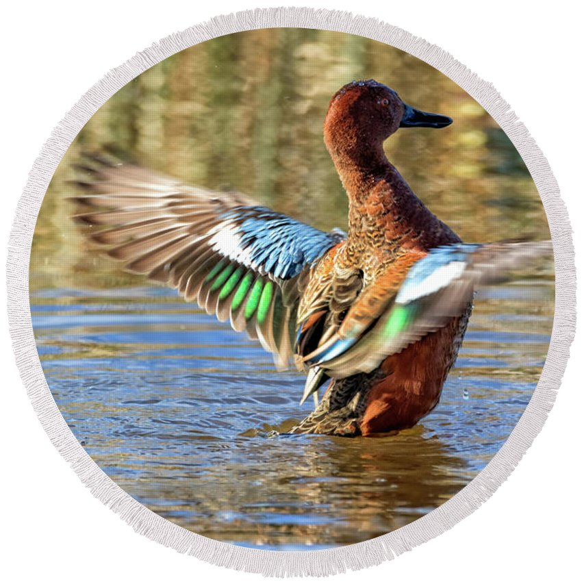 Cinnamon Teal Round Beach Towel featuring the photograph Cinnamon Teal Celebrating by Kathleen Bishop