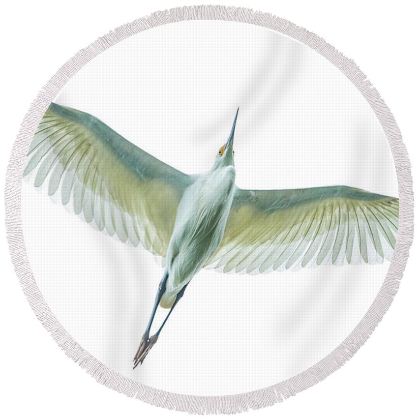 Photography Round Beach Towel featuring the photograph Dimorphic Egret Egretta Dimorpha by Panoramic Images