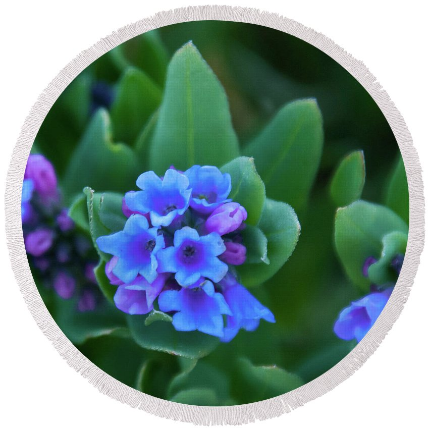 Dwarf Bluebell Round Beach Towel featuring the photograph Dwarf Bluebell Detail by Cascade Colors