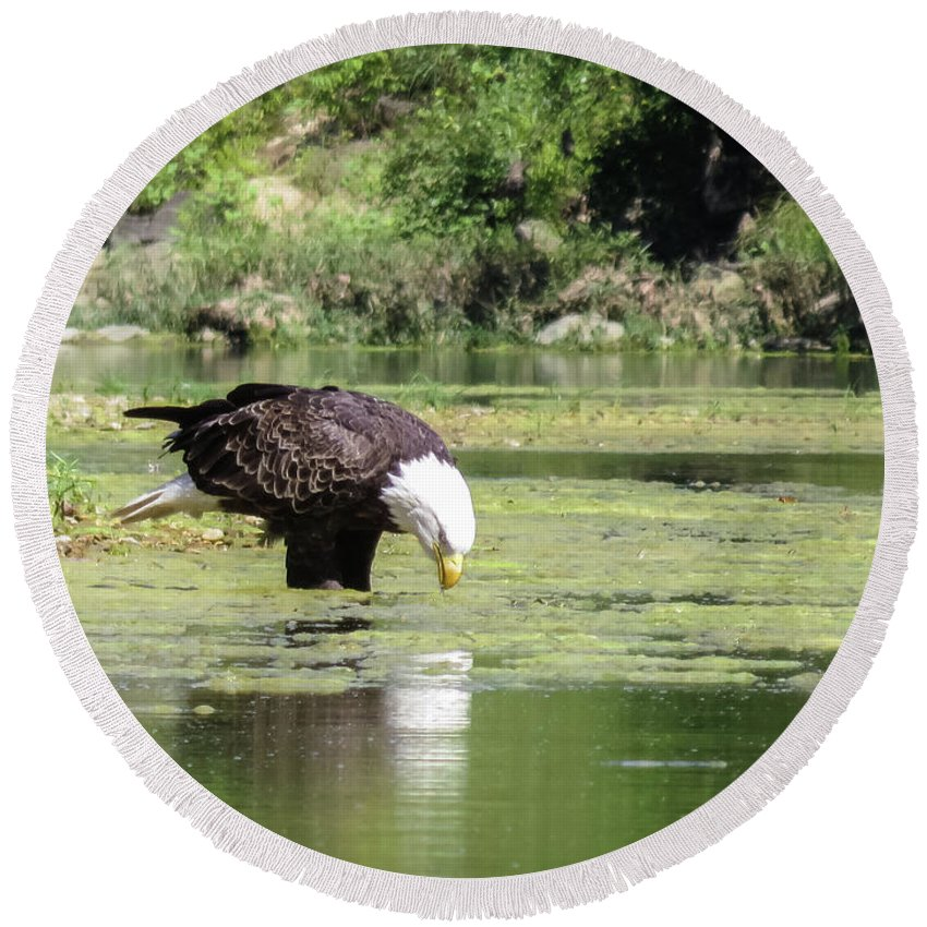 Eagle Round Beach Towel featuring the photograph Eagle's Drink by Terri Morris