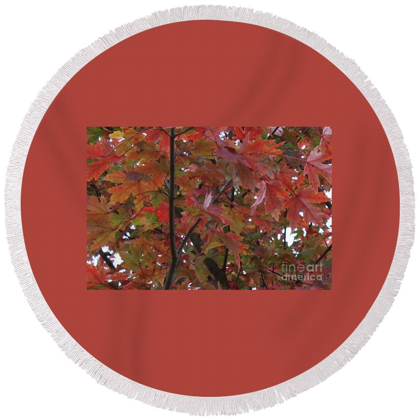 Red Leaves Round Beach Towel featuring the photograph Fall Collage by Leslie Gatson-Mudd