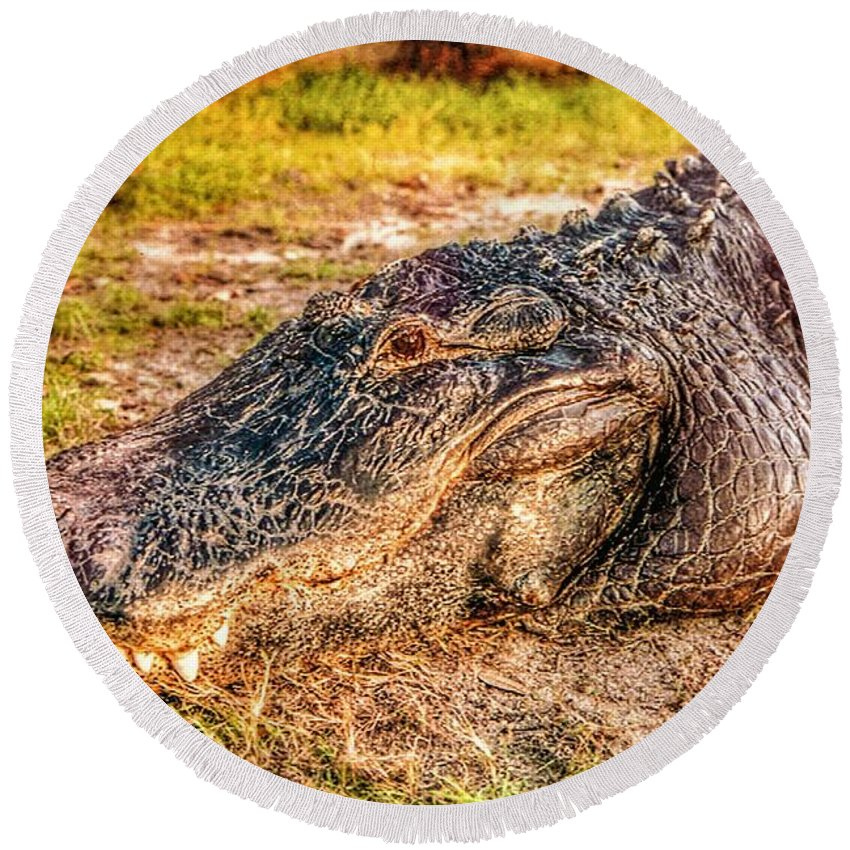 Florida Round Beach Towel featuring the photograph Florida Gator 1 by Tommy Anderson