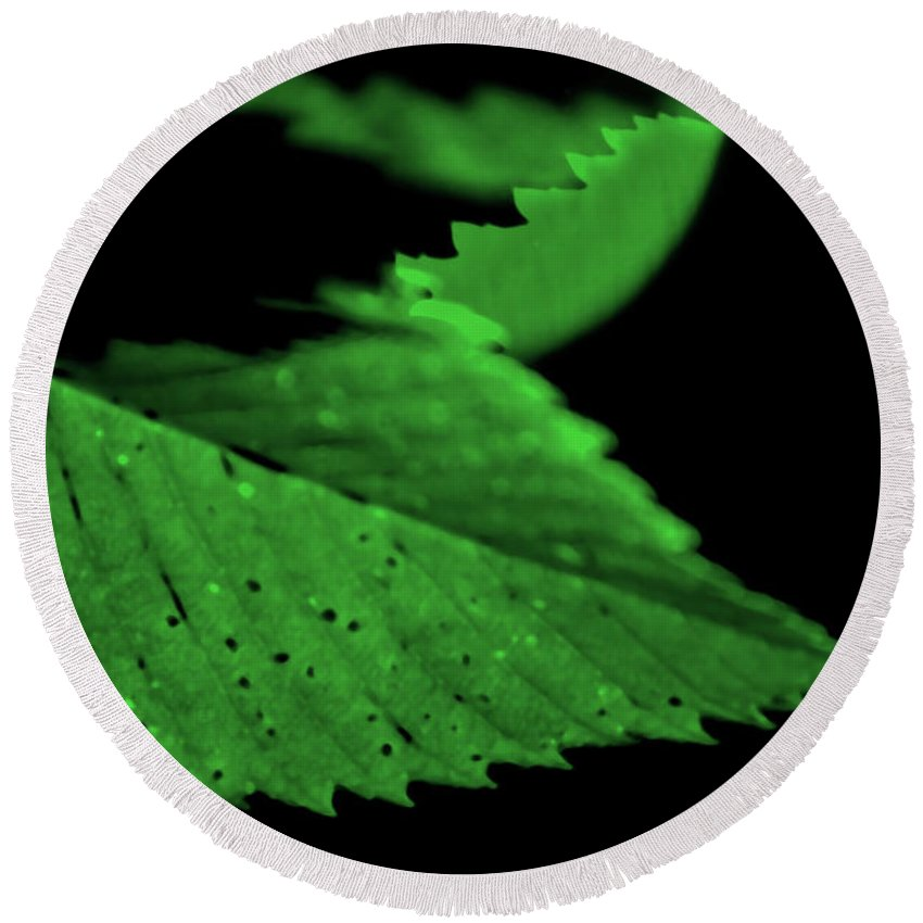 Leaf Round Beach Towel featuring the photograph Green Leaf in Sun by Lonnie Paulson