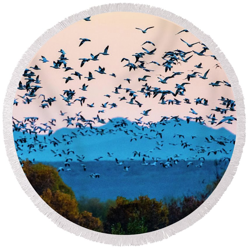 Photography Round Beach Towel featuring the photograph Herd Of Snow Geese In Flight, Soccoro by Panoramic Images
