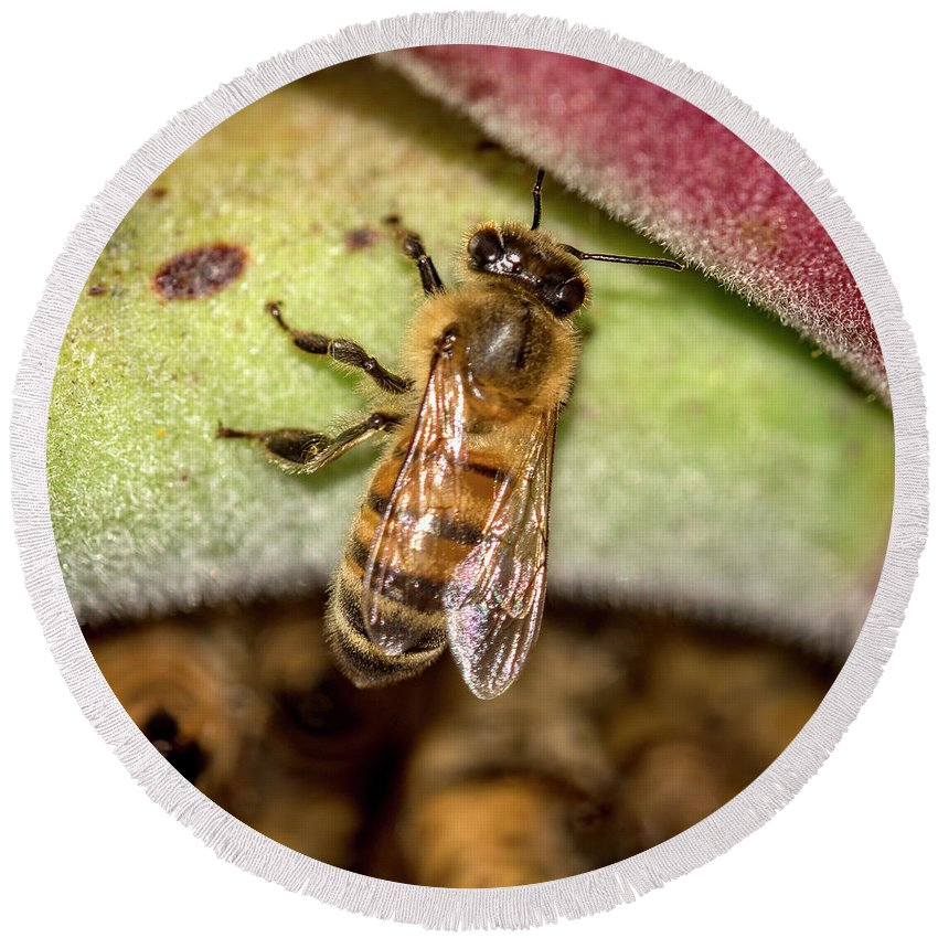 Apis Mellifera Round Beach Towel featuring the photograph Hiding From The Swarm 1 by Shawn Jeffries