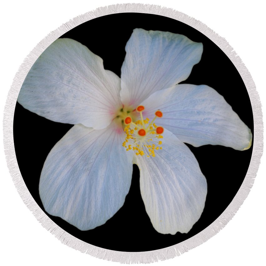 White Hibiscus Bloom Round Beach Towel featuring the photograph I Saw The Figure Five In White by Charles Stuart
