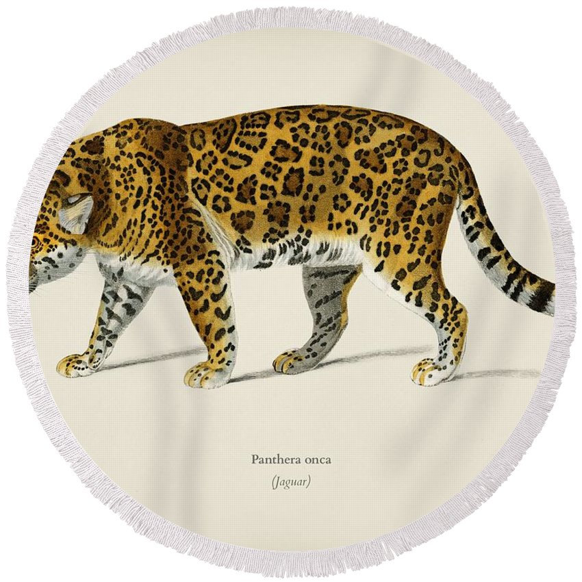 Animal Round Beach Towel featuring the painting Jaguar Panthera Onca Illustrated By Charles Dessalines D' Orbigny 1806-1876 by Celestial Images