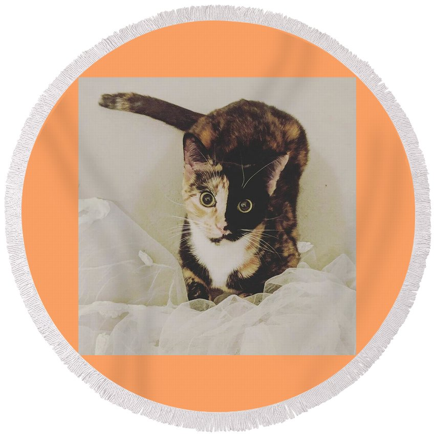 Cute Cat Round Beach Towel featuring the photograph Meet Star by Star And Ray