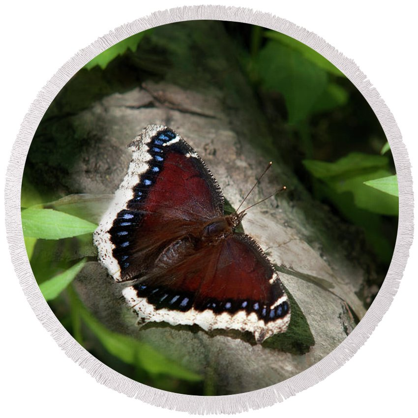 Mourning Cloak Butterfly Round Beach Towel featuring the photograph Mourning Cloak Butterfly by Christina Rollo