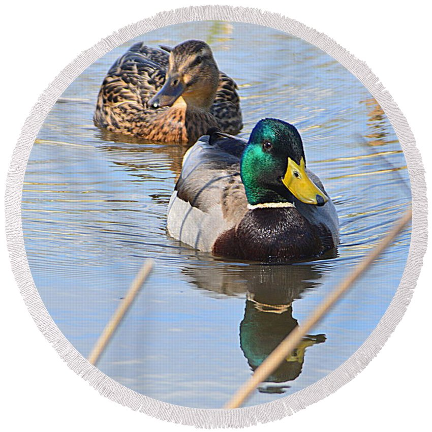 Mr And Mrs Duck Round Beach Towel featuring the photograph Mr And Mrs Duck by Andy Thompson