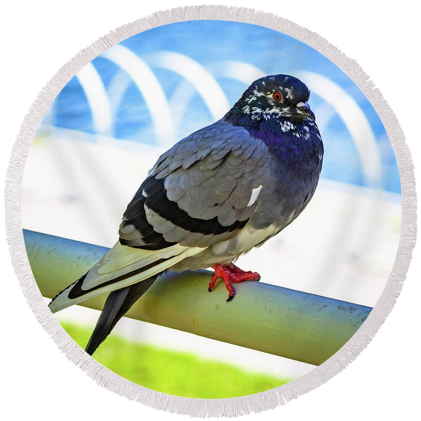 Pigeon Round Beach Towel featuring the photograph Mr. Pigeon by Borja Robles