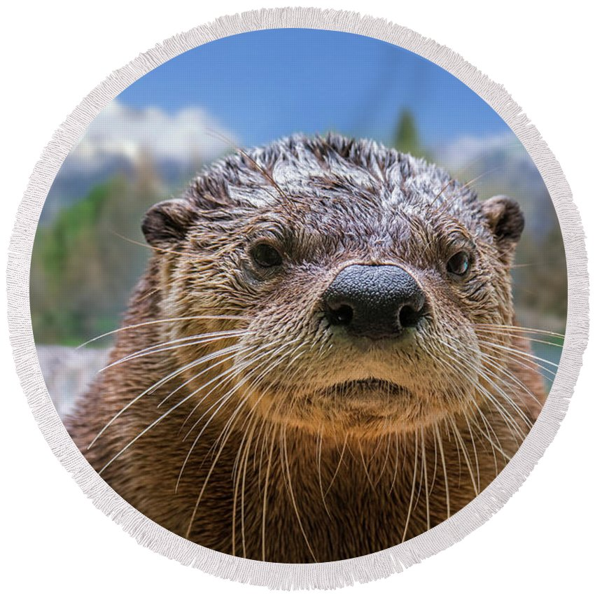 North American River Otter Round Beach Towel featuring the photograph North American River Otter by Arterra Picture Library