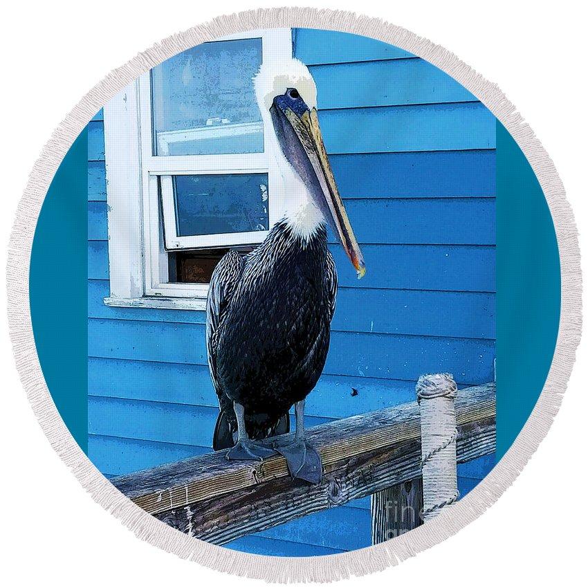 Pelican California Bird Fish Bird Seaside Oceanside Ca Ocean Pacific Ocean Oceanside Pier Blue White Brown Round Beach Towel featuring the photograph Oceanside Pelican Right by Tammera Malicki-Wong