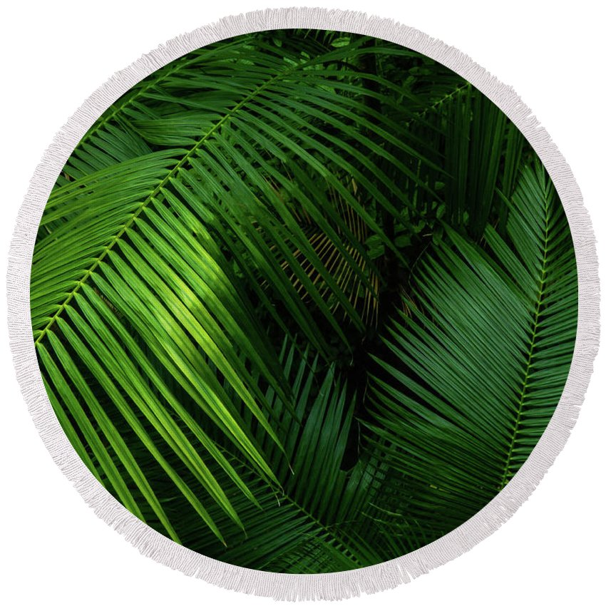 Palm; Minimalism; Minimalist; Brown; Green; Yellow; Asia; Singapore; Leaves Round Beach Towel featuring the photograph Palm Saturday by Steve Taylor