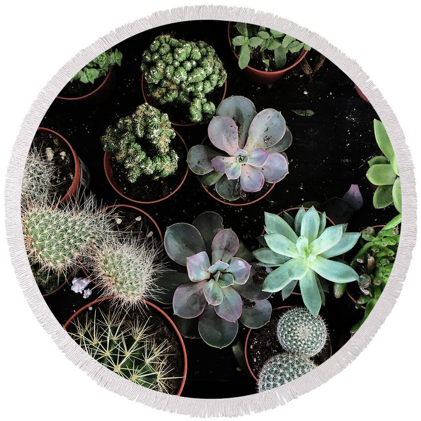 Plants Round Beach Towel featuring the photograph Plant Collection by Cassia Beck