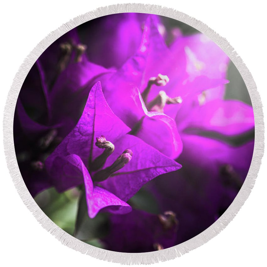Flower Round Beach Towel featuring the photograph Rays Of Bougainvillea by Jorgo Photography - Wall Art Gallery