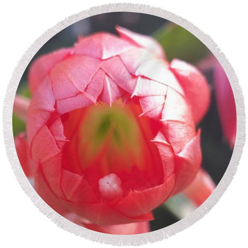 Round Beach Towel featuring the photograph Red Flower by Paola Baroni