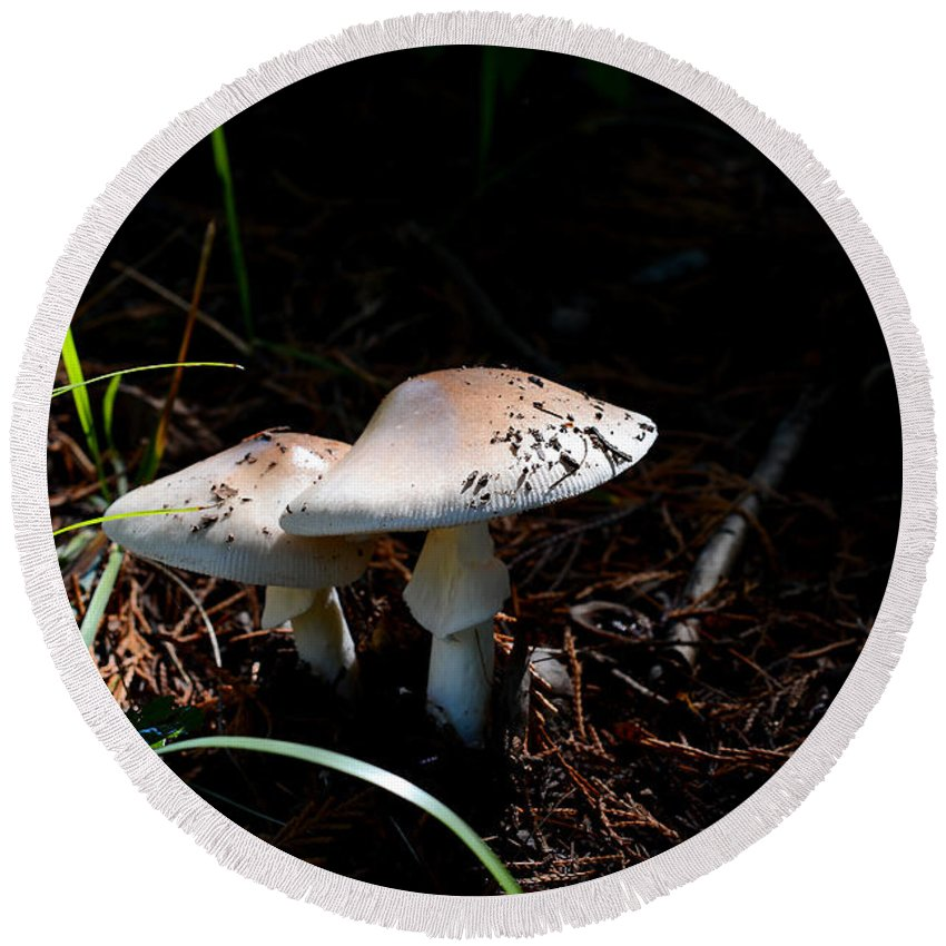 Shrooms Round Beach Towel featuring the photograph Shrooms In Low Light by Todd Hostetter