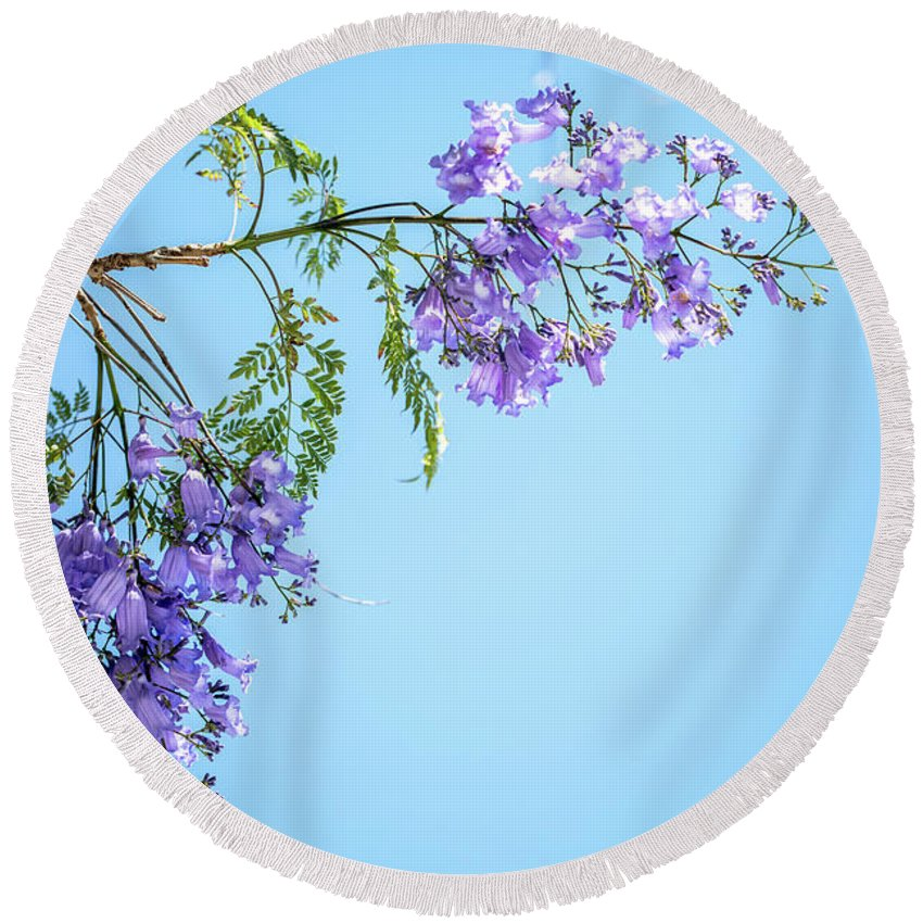 Jacaranda Tree Round Beach Towel featuring the photograph Springtime Beauty by Az Jackson