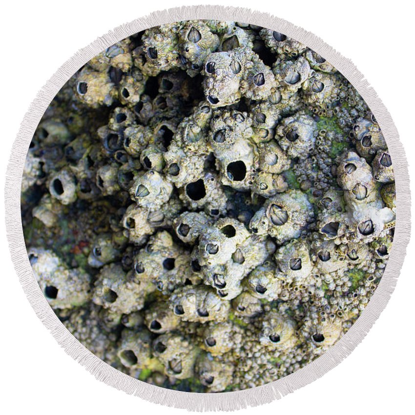 Intertidal Zone Round Beach Towel featuring the photograph Tidal Pool 5 by Megan Dirsa-DuBois
