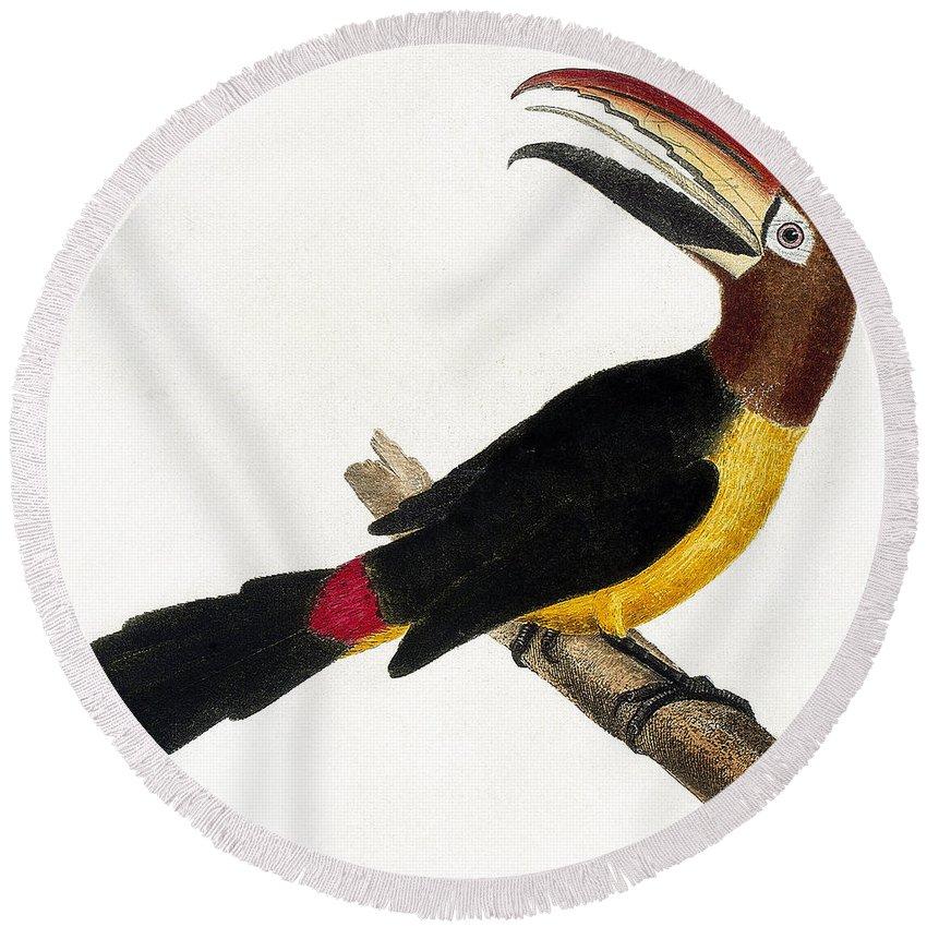 Designs Similar to Toucan by European School