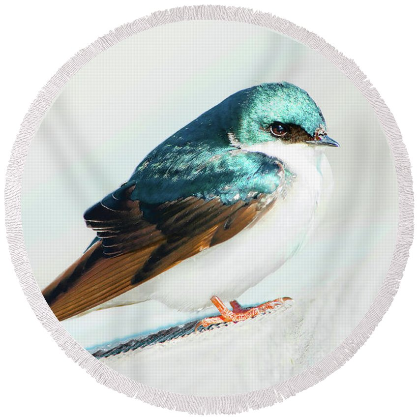 Tree Swallow Round Beach Towel featuring the photograph Tree Swallow by Regina Geoghan