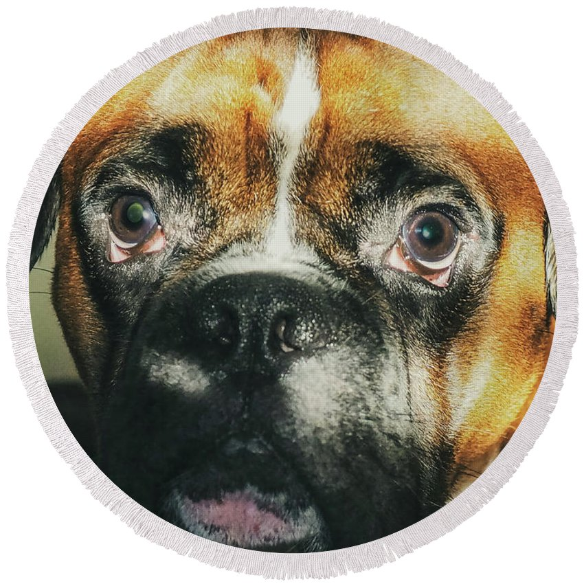 Dog Round Beach Towel featuring the photograph Where'd Everybody Go by CWinslow Shafer