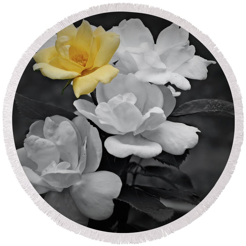 Rose Round Beach Towel featuring the photograph Yellow Rose Cluster Partial Color by Smilin Eyes Treasures