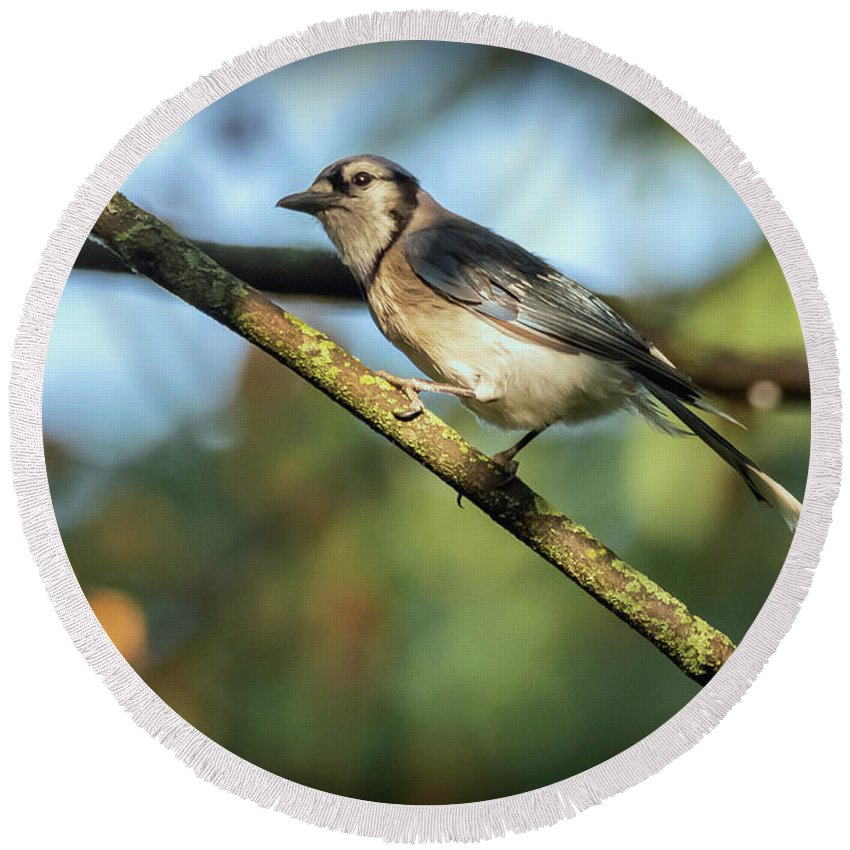 Bird Round Beach Towel featuring the photograph 20-0621-0630 by Anthony Roma